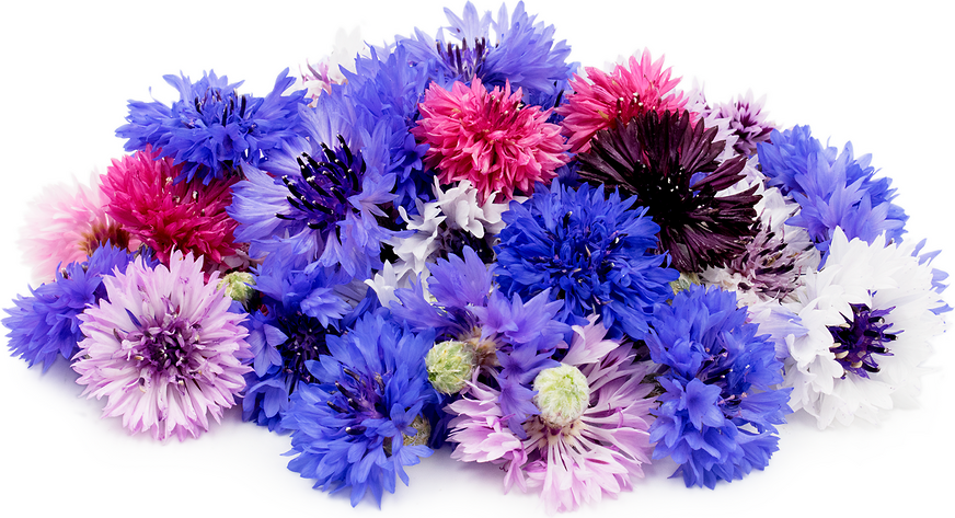 Bachelor S Button Flowers Information Recipes And Facts