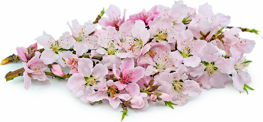 Peach Blossoms picture