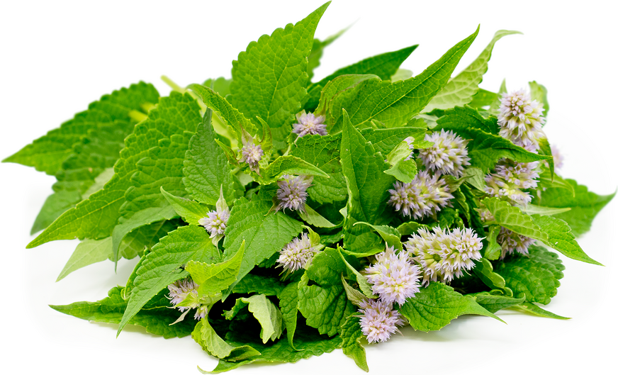 Anise Hyssop picture
