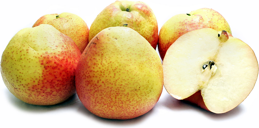 Papple Pears Information And Facts
