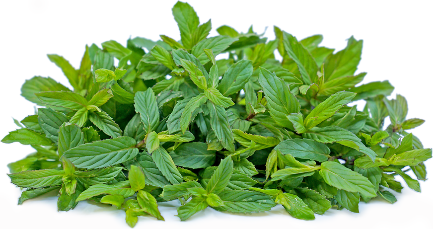Persian Mint picture