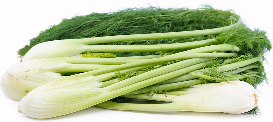 Fennel picture