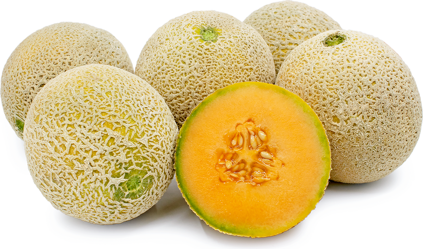 Cantaloupe Facts – Kidzsearch.com > wiki explore:images videos games.
