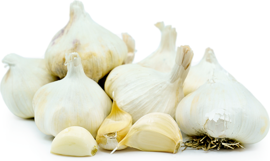 Garlic picture