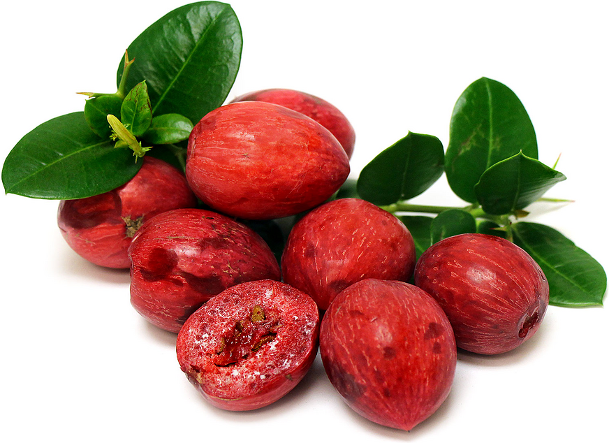 Natal Plums Information and Facts