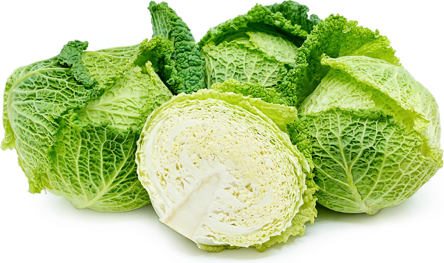 Savoy Cabbage Information And Facts
