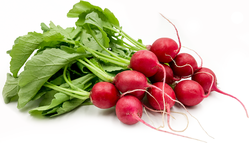 Japanese Red Cherry Radish picture