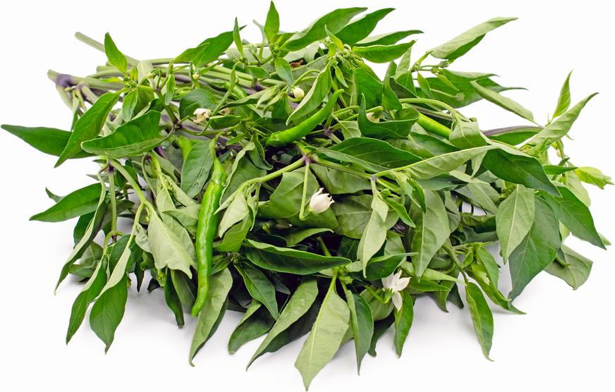 Image of Sili leaves