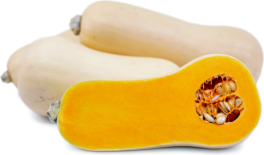 Butternut Squash Information And Facts