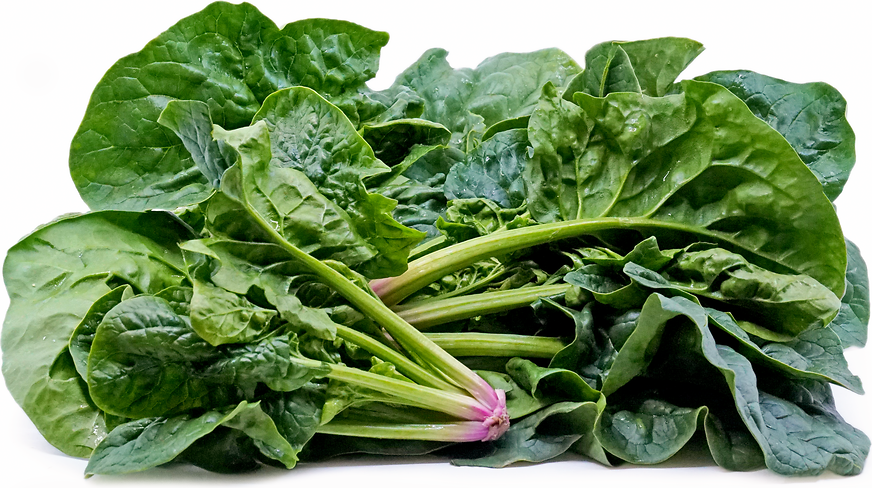 Bloomsdale Spinach picture